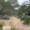 More on the Ranch, Ambush Hill